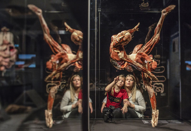 picture BODY WORLDS - CYKLUS ŽIVOTA